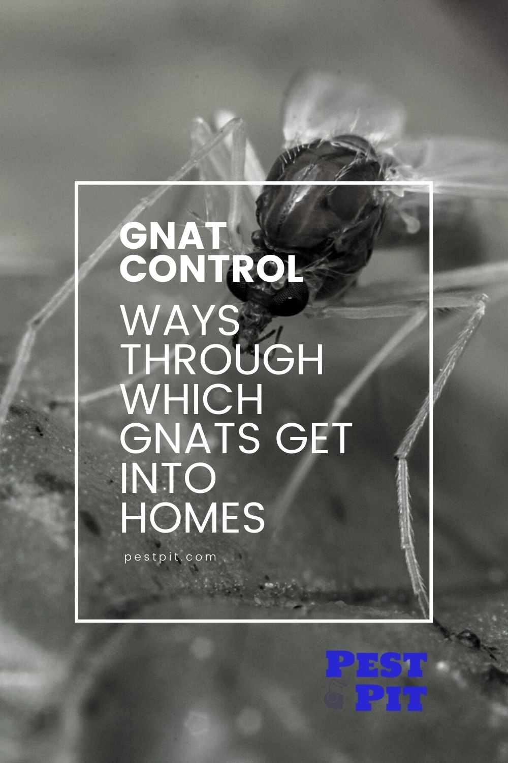 Ways Through Which Gnats Get into Homes