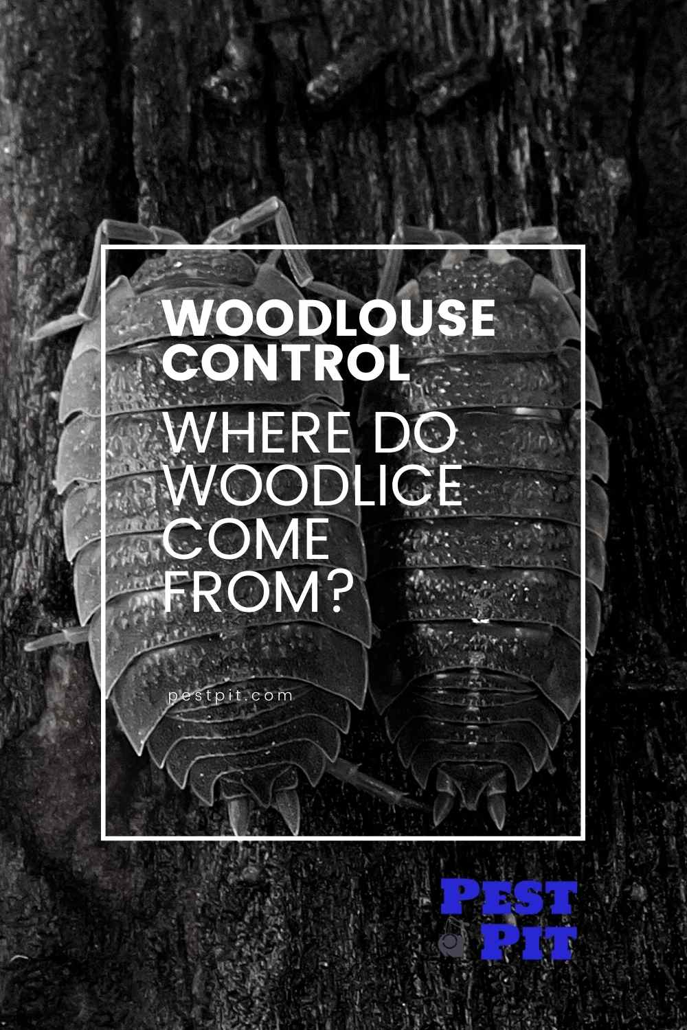 Where Do Woodlice Come From (1)