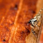 How To Keep Spiders Out Of Your Shed