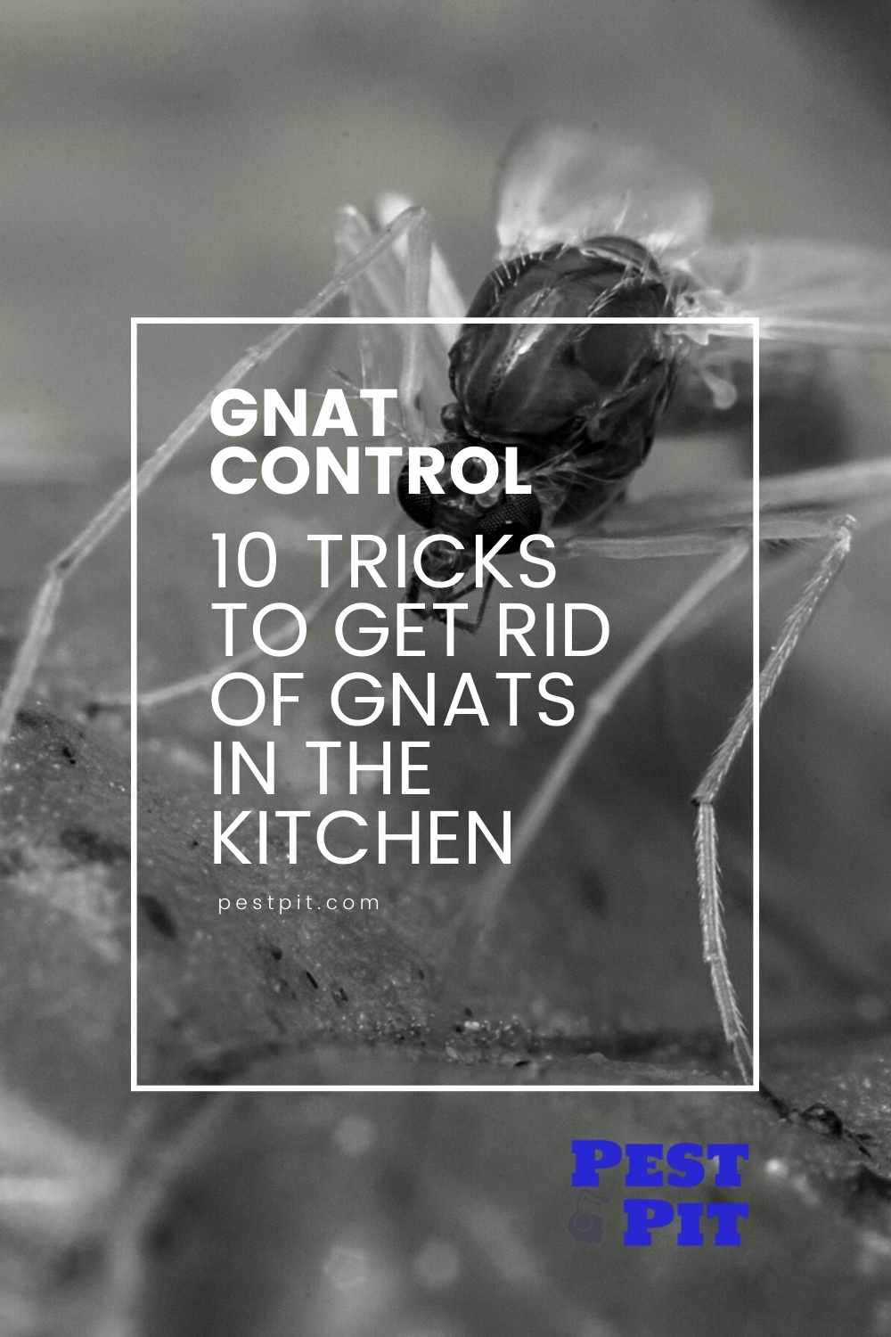 10 Tricks To Get Rid Of Gnats In The Kitchen