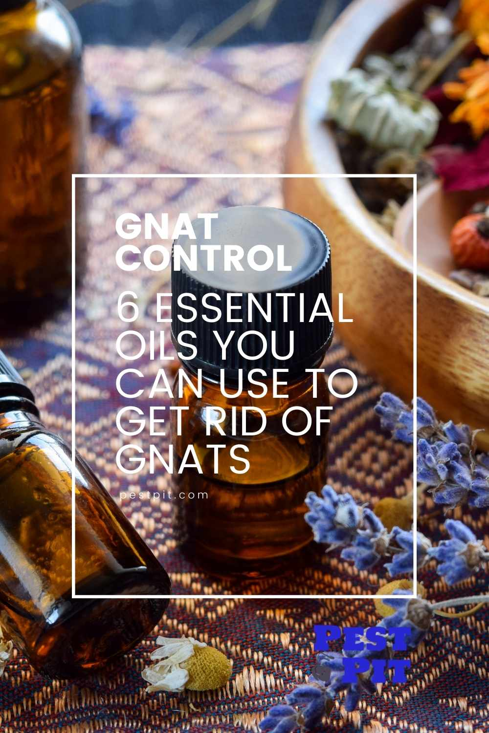 6 Essential Oils You Can Use To Get Rid Of Gnats