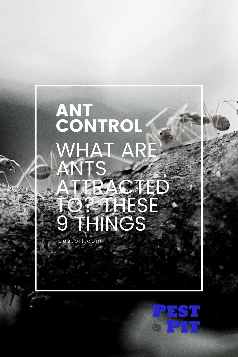 What Are Ants Attracted To These 9 Things