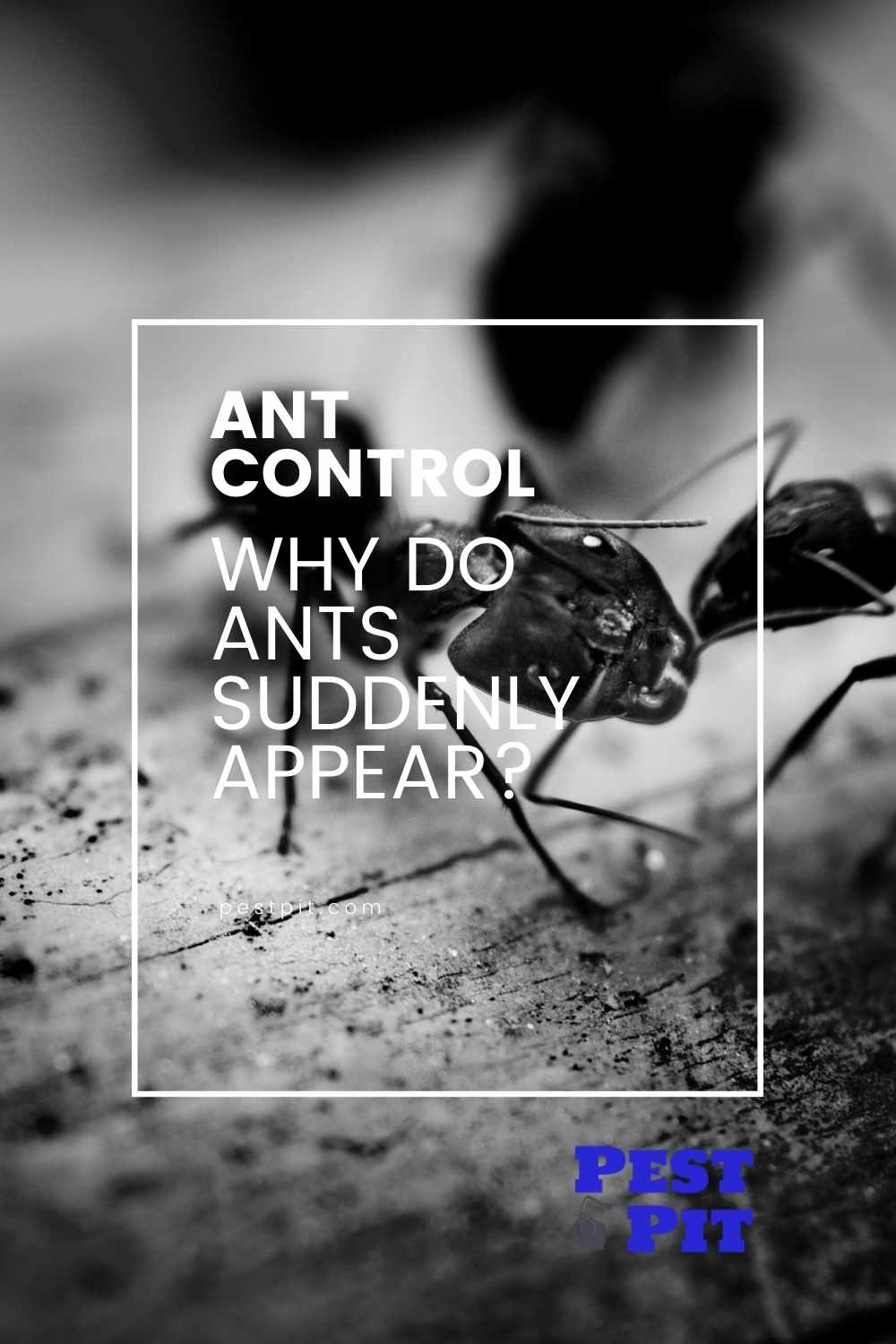 Why Do Ants Suddenly Appear