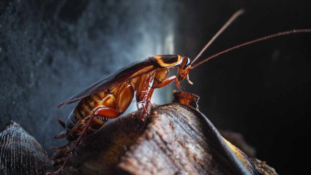 cockroach on garbage