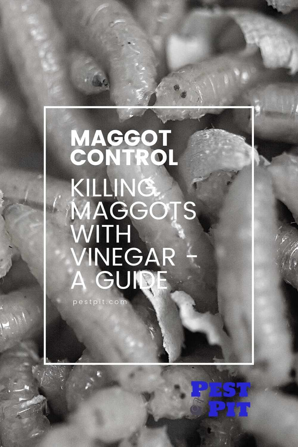Killing Maggots With Vinegar - A Guide